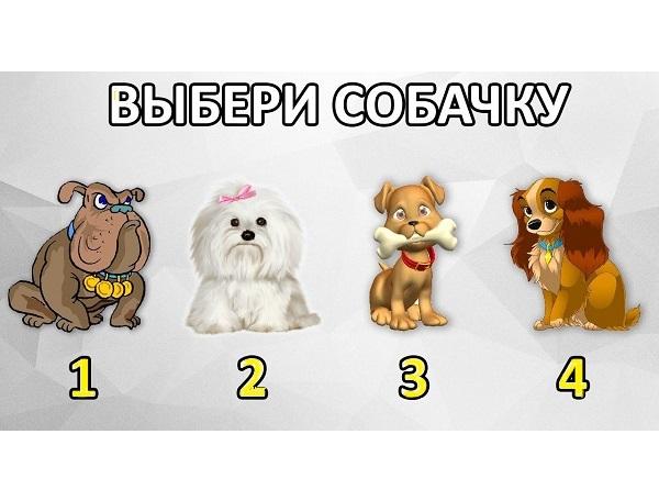 Выбери собачку и узнай свою главную черту характера.