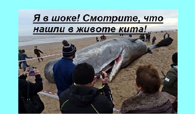 Видео. Смотрите, что нашли в животе этого кита!