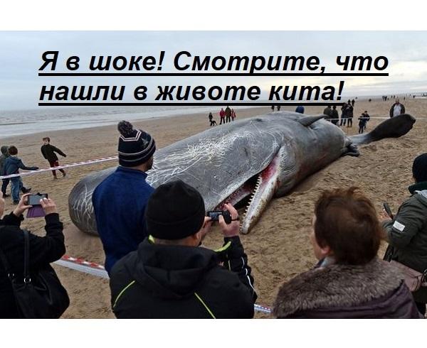 Я в шоке! Смотрите, что нашли в животе этого кита!