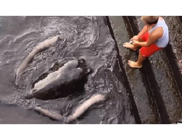 Мальчик просто кидал хлеб в воду, чтобы прикормить рыбок, как вдруг всплыло НЕЧТО!