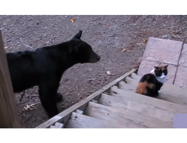 После просмотра этого видео я стал бояться кошек! Не смотрите, если у Вас слабые нервы!