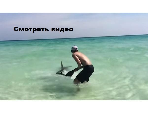 Видео. Акула подплыла близко. Мужчина кинулся вытаскивать её на берег, когда заметил в пасти ЭТО!