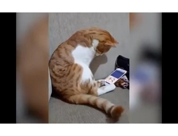 Коту показали запись с его погибшим хозяином. Вы только посмотрите, что сделал кот...