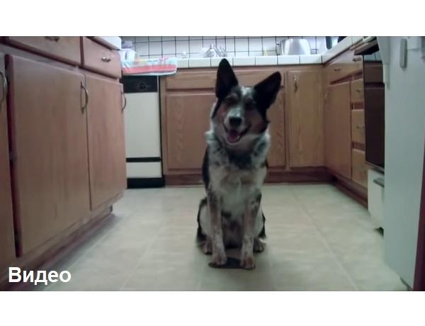 Я бы никогда не поверил, что собака может делать такое, пока не увидел собственными глазами!