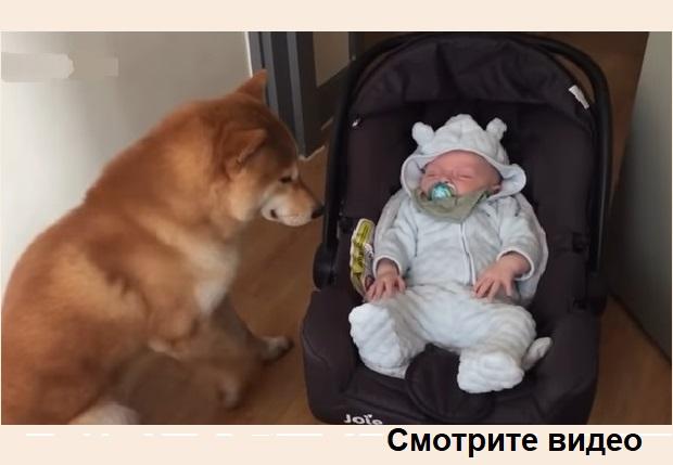 Видео! Младенца оставили одного с собакой. Смотрите, что сделал пёс!