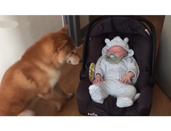 Видео. Младенца оставили одного с собакой. Смотрите, что сделал пёс!