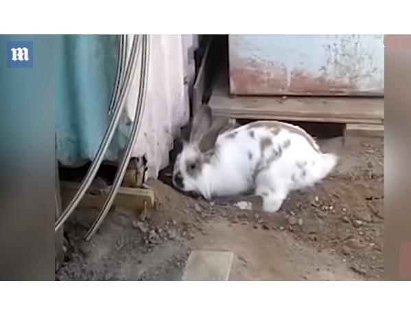 Видео: Кролик рыл ямку полдня. Вы не поверите, когда увидите, кого он спас!