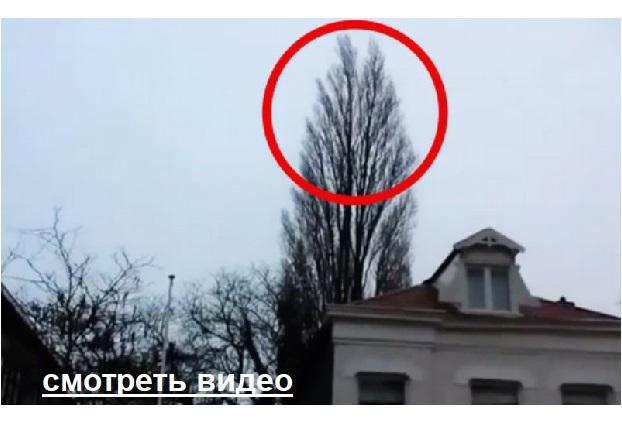 Мужчина просто снимал дерево. Но на 0:18 случилось то, что он долго ещё не забудет.