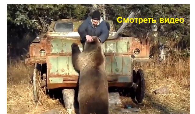 Если бы не засняли, никто бы не поверил, медведь...