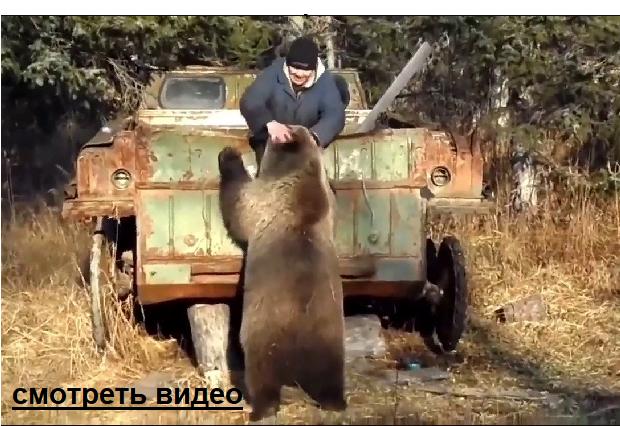 Если бы не засняли, никто бы не поверил, медведь