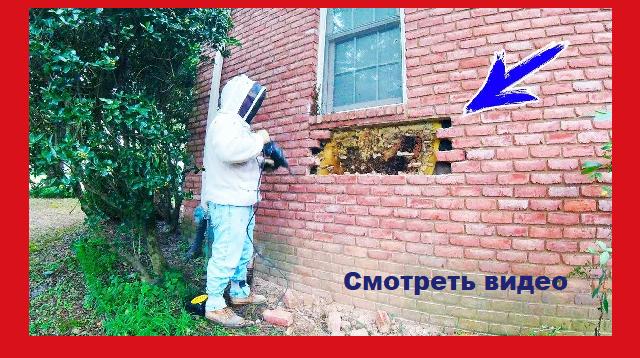 Соседи обходили этот дом стороной. Но когда вскрыли стену, никто не ожидал увидеть такое.